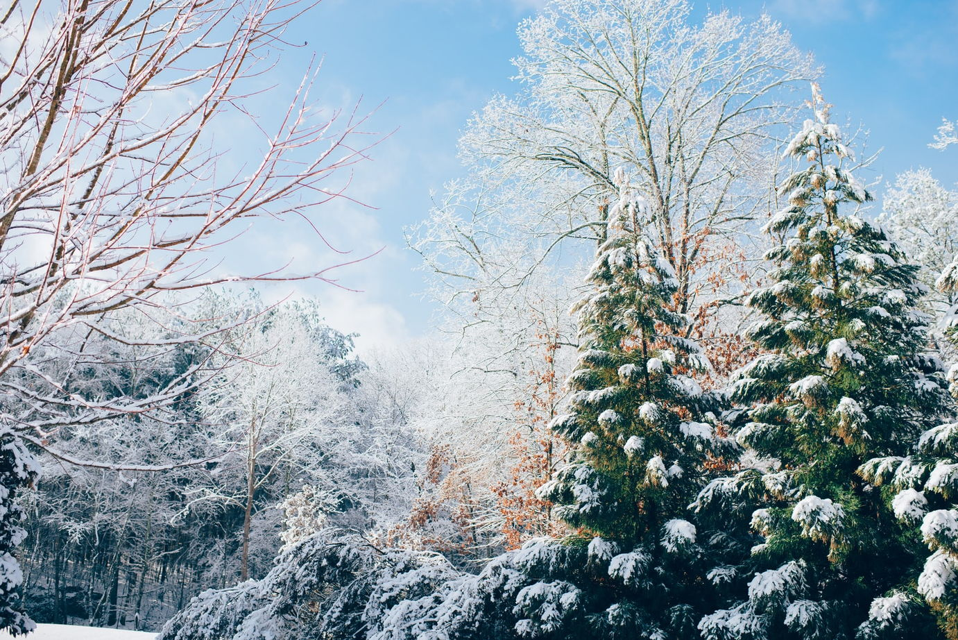 winter background examples