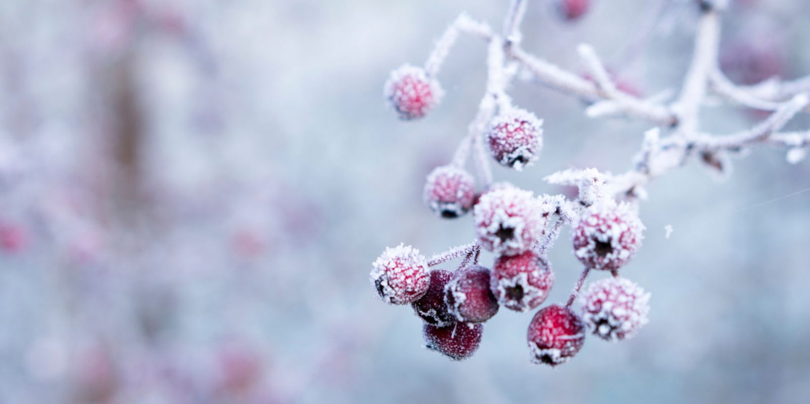 Winter background Tumblr - weblium