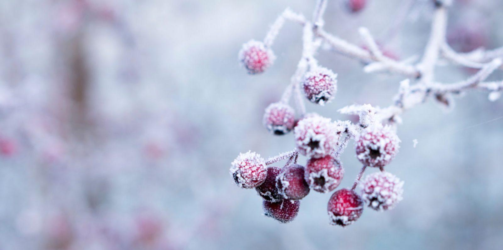 Winter background Tumblr - weblium